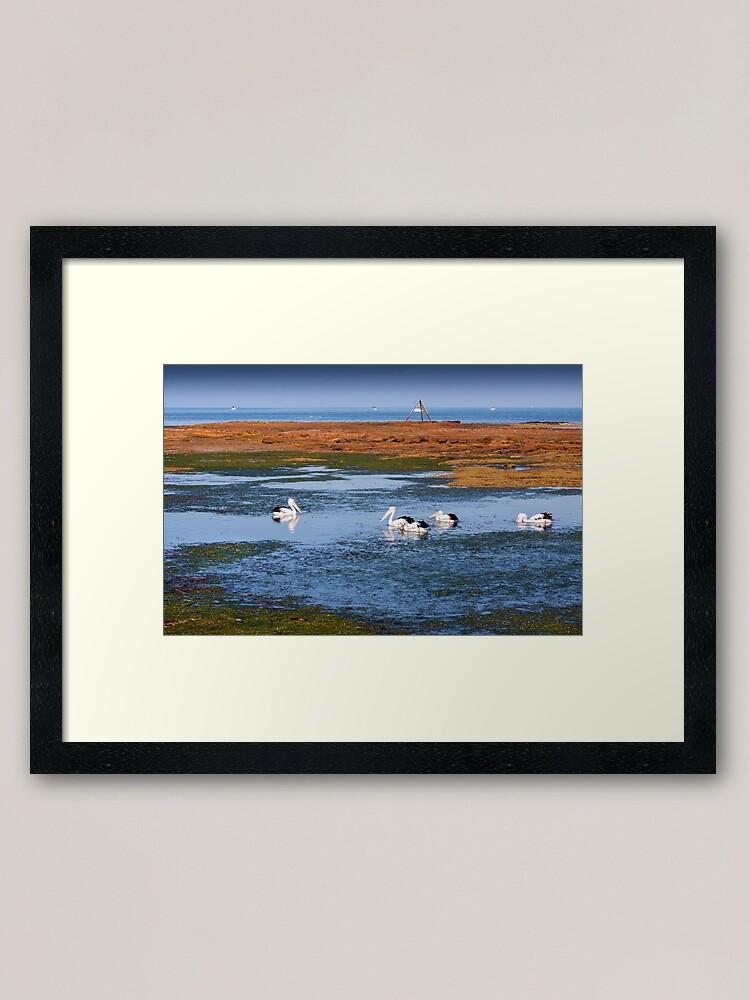 Alternate view of Pelicans Feeding - Rickett's Point Framed Art Print