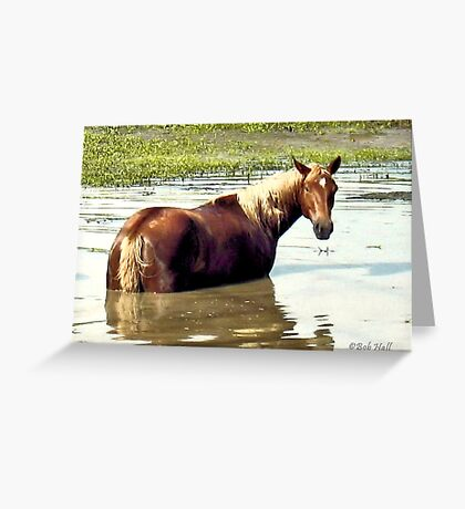 """""""Horses with Attitude, No. 2, """"What You Lookin' At?'""""... prints and products Greeting Card"""