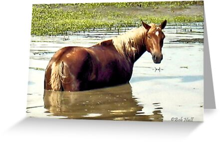 """""""Horses with Attitude, No. 2, """"What You Lookin' At?'""""... prints and products by © Bob Hall"""