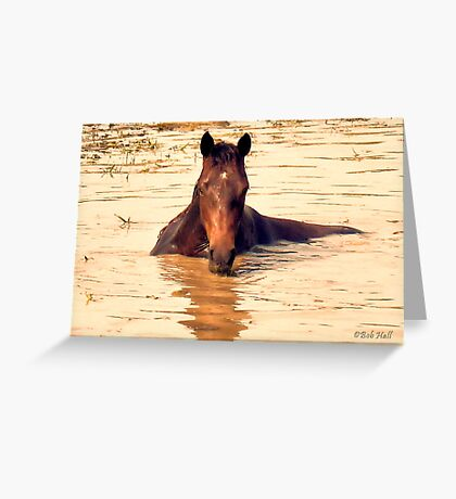"""""""Horses with Attitude, no.1, 'Come Out Here and Say That'""""... prints and products Greeting Card"""