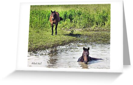 """""""LOOKING AT ME, LOOKING AT YOU""""... prints and products by Bob Hall©"""