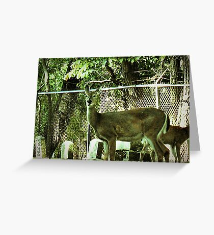 """""""Oh, Deer!""""...prints and products Greeting Card"""