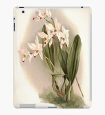 Reichenbachia Orchids illustrated and described by F. Sander 1888 V1-V2 036 iPad Case/Skin
