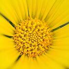 Yellow Daisy by Darren Freak
