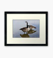 Canada Goose pair Framed Print