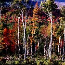 Birches Against Color by Wayne King