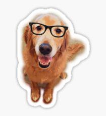 Hipster Golden Retriever Sticker