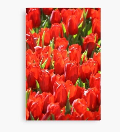 MIFGS - Red Tulips - One Canvas Print