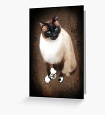 <º))))><U GOTTA B PLAYIN WITH YOUR OWN DING-A-LING (SIAMESE CAT) <º))))><      Greeting Card