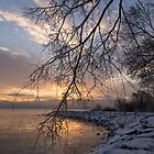 Beautiful Aftermath of an Ice Storm - Sunrise Through Frozen Branches by Georgia Mizuleva