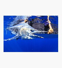 Black Marlin  Photographic Print