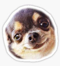little dog Sticker
