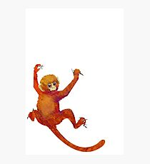 Clingy Monkey Photographic Print