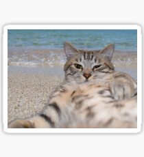 Cat makes selfie lying on the sand Sticker