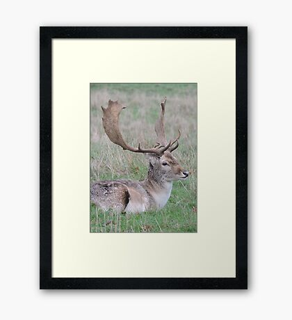 The Resting Prince Framed Print