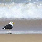 Seagull by Hermien Pellissier