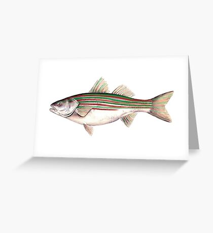 Holiday Striped Bass Greeting Card