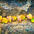 Autumn leaves by Silvia Ganora