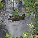 A Duck in Strbske Pleso by Ilan Cohen