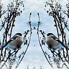 Birds by julie08