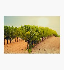 Vineyard Field in Southern France Photographic Print