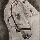 Zeus - The Spanish Stallion by Stephanie Greaves