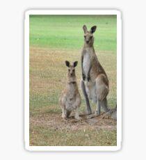 Kangaroos - Mum and Joey Sticker