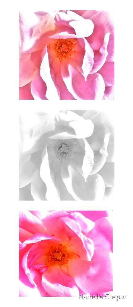Roses by Nathalie Chaput