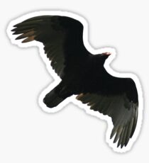 Turkey Vulture Sticker