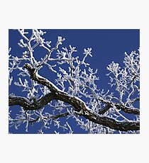 Winter frost on branch Photographic Print