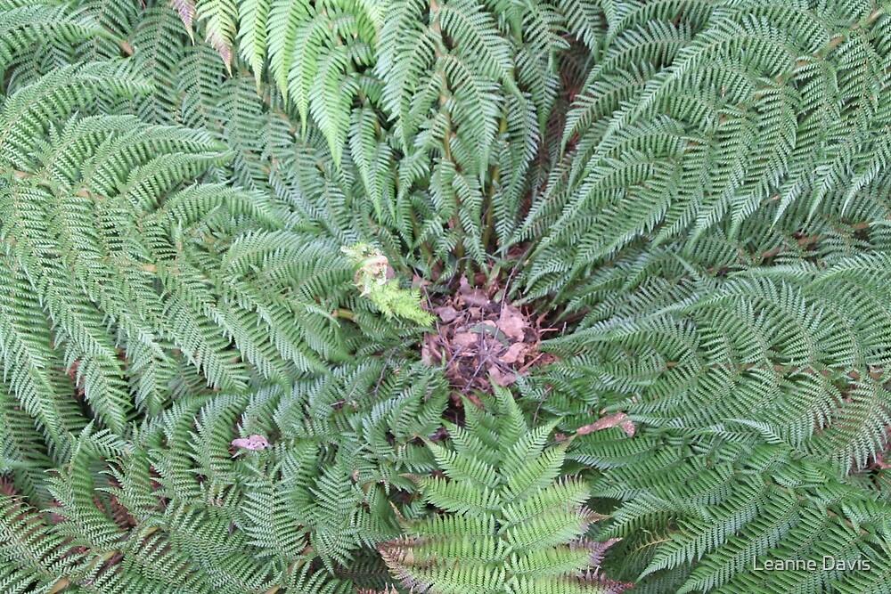 Tree Fern by Leanne Davis