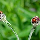 Bugs on Buds  by geof