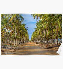 Topical Landscape Scene at Porto Galinhas Brazil Poster