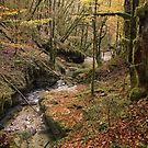 Autumn colors along Abime river by Patrick Morand