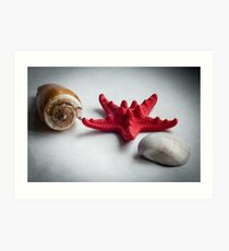 A sea snail shell, red starfish and white clam Art Print