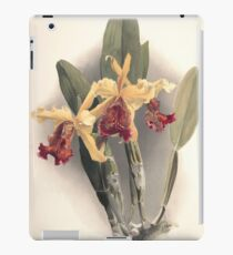 Reichenbachia Orchids illustrated and described by F. Sander 1888 V1-V2 080 iPad Case/Skin