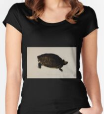 Tortoises terrapins and turtles drawn from life by James de Carle Sowerby and Edward Lear 038 Women's Fitted Scoop T-Shirt
