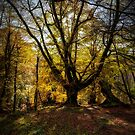 Autumn colours in the forest by Jeremy Lavender Photography