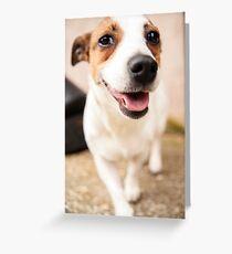 Jack Russel 1 Greeting Card
