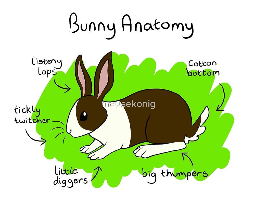 Bunny Anatomy\