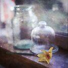 daffodil by Jill Ferry