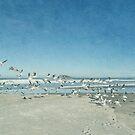 Gulls flying by Jill Ferry