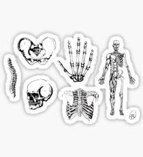 Human Anatomy Illustrations 2 Sticker