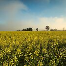 Canola Surprise by Malcolm Katon