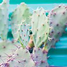 cactus close up by Jessica Sharmin