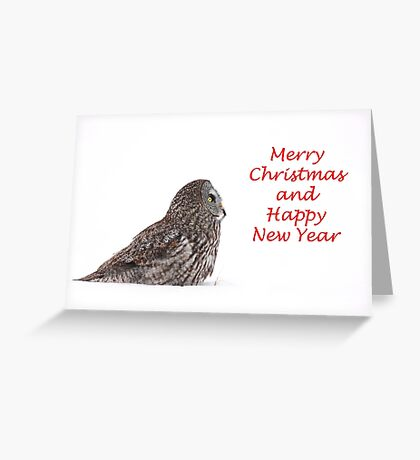 Christmas Great Grey Owl Greeting Card