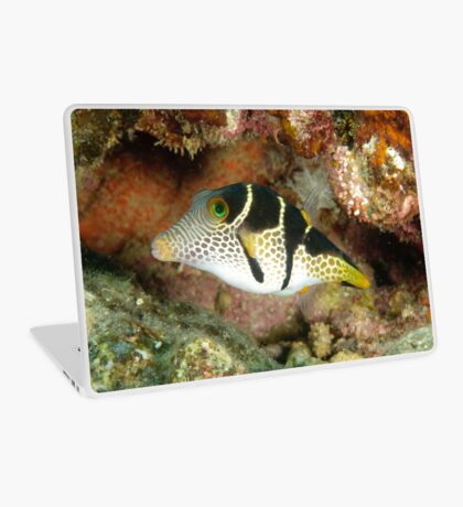 Clown toby - Canthigaster valentini Laptop Skin