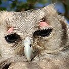GIANT or Verreaux Eagle Owl -  Bubo lacteus by Magriet Meintjes