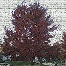 Autumn Tree by storecee