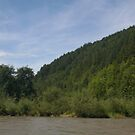 Trees near the Dunajec river by Ilan Cohen